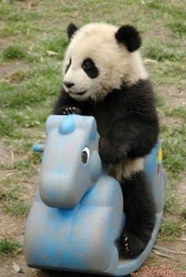cute-animals-2040