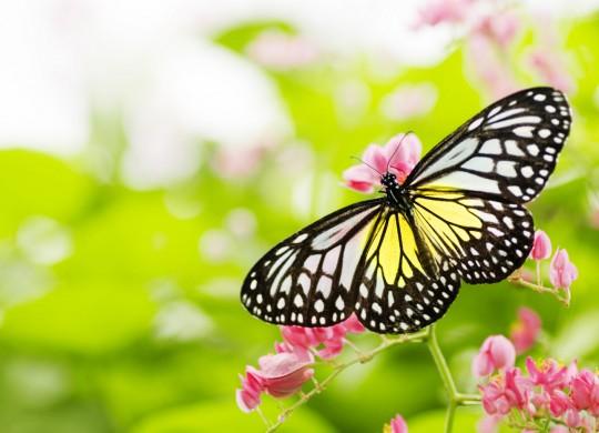 Butterfly_27