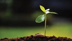 HW-green-remediation-sprout-and-soil